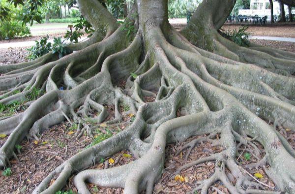 tree-root.jpeg