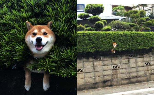 fencedog_li.jpeg
